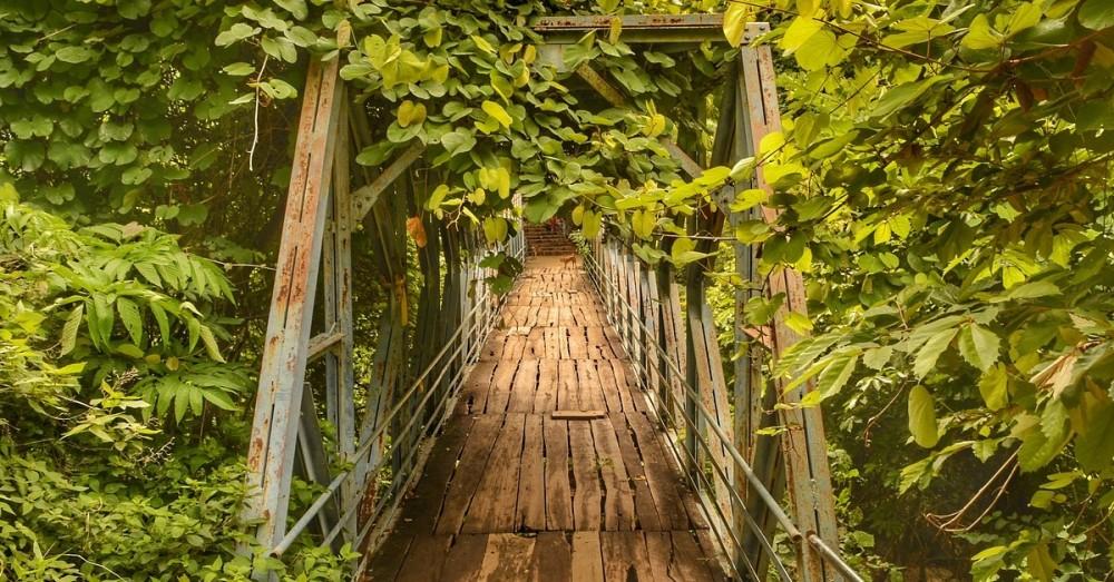 Indien baut Grünbrücken, um Tiere zu schützen