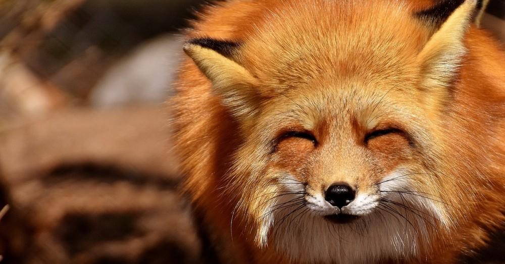 Irischer Pub wird zur Wildtierklinik