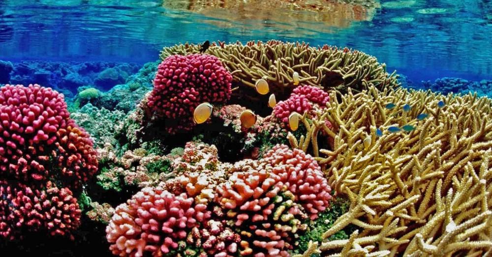 Verdreifachung des Korallenriff-Schutzgebietes im Golf von Mexiko