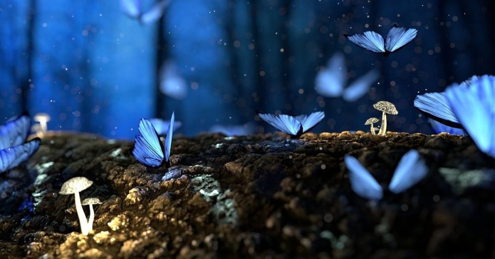 Waldfläche ist besser als Nutzfläche