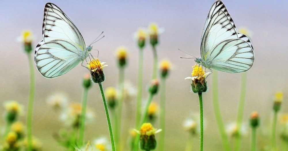 EU: Naturschutz wird vorangetrieben