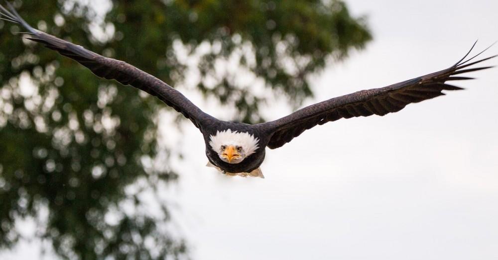 Schwarze Rotorblätter schützen Vögel