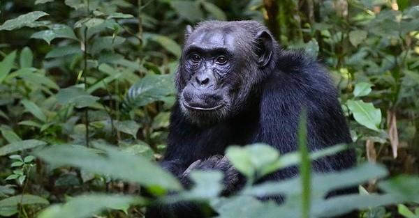 3 Millionen neue Bäume für Uganda
