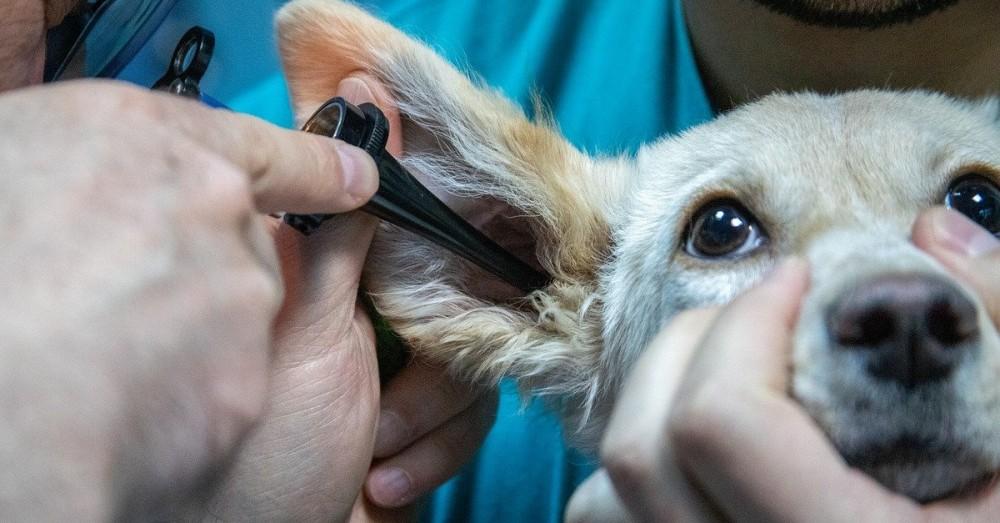 Berliner Tierärztin versorgt kostenlos Tiere von Bedürftigen