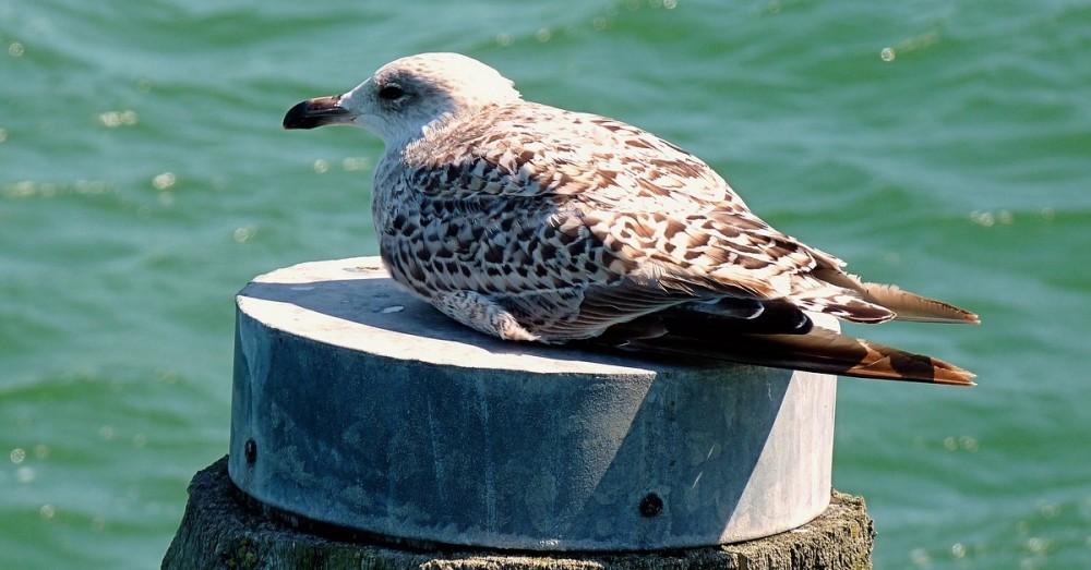 Eine schwimmende Vogelscheue, um Seevögel zu retten