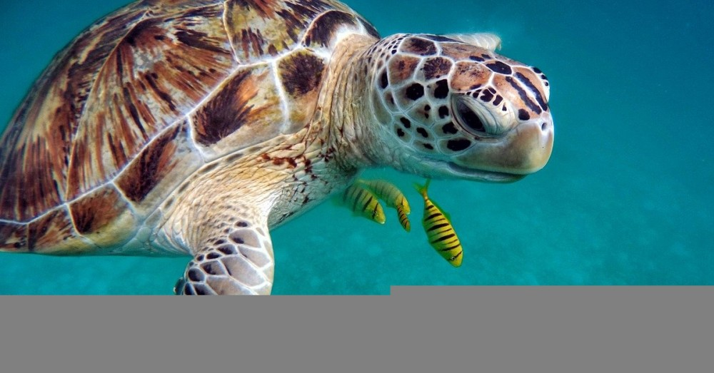 Überführung von Schildkröteneier-Dieben