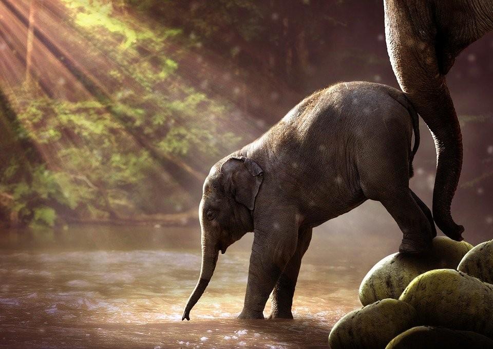 Ärgere dich nicht, wenn dir ein Vogel auf den Kopf kackt, sondern freu dich, dass Elefanten nicht fliegen können.