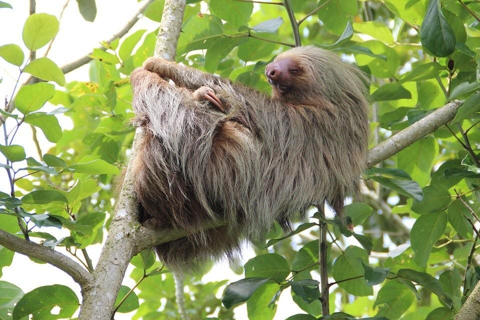 Costa Rica als Vorreiter im Naturschutz