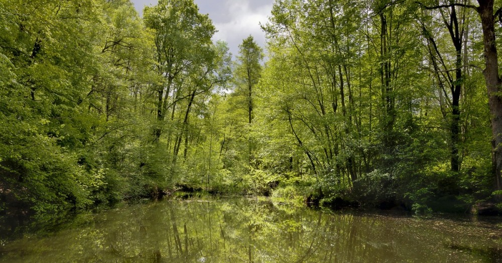 Grüner Grenzstreifen wird Naturmonument