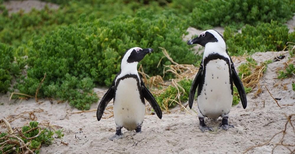 Argentinischer Biologe setzt sich für die Pinguine ein