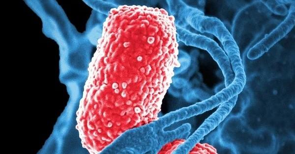Bakteriengift lässt Wunden schneller heilen