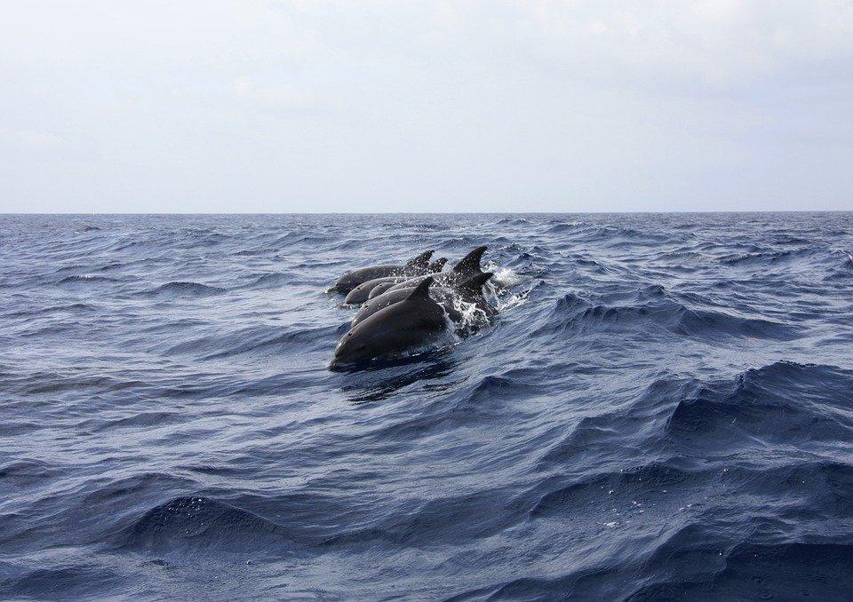 Neuseeland will Delfine schützen