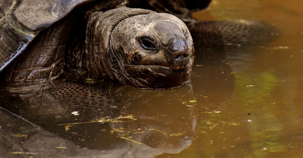 Vom Aussterben bedrohte Schildkrötenart entdeckt