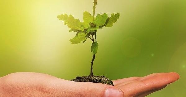 Milliarden neue Bäume für Äthiopien