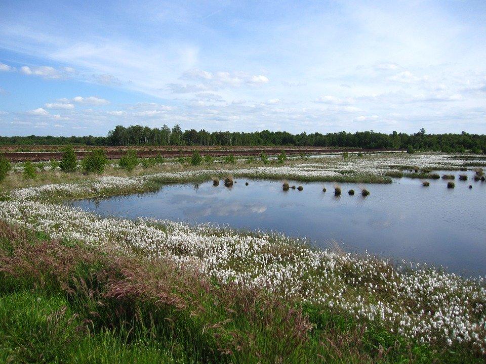Pläne der EU-Kommission Mehr Naturschutz in Europa