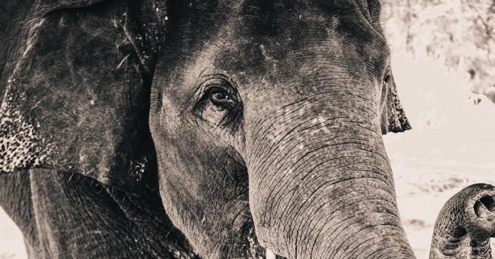 Einsamer Elefant nach Jahren der Gefangenschaft befreit