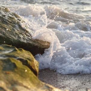 Seegras könnte Welthunger besiegen