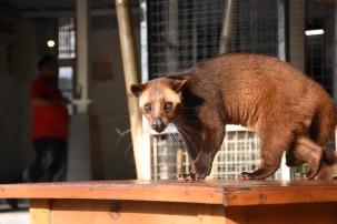 Verbot von Handel mit wilden Tieren