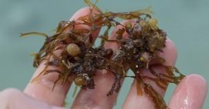 Zero-Waste durch Verpackungen aus Algen