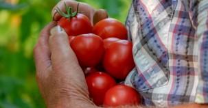 Soziales Gartenprojekt für Bedürftige