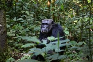 Rettung für den Ebo-Wald