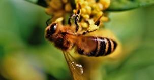Morgan Freeman hat seine Farm zum Bienenschutzgebiet erklärt