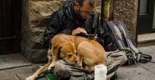 Tierheim in Bonn nimmt über Nacht Tiere von Obdachlosen auf