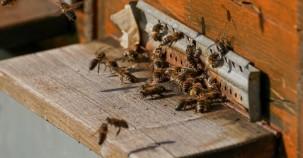 Durch Bienen Startup 12 Millionen mehr Bienen