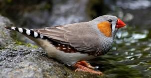 Ultraviolette Folie rettet Vogelleben