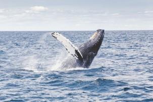 Forschung: Ozeane können sich bis 2050 erholt haben