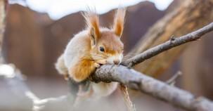 Eine Brücke für Eichhörnchen