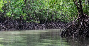 Mangroven in Brasilien bleiben geschützt