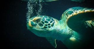 Große Schildkröten-Rettung in Texas
