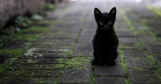 Schornsteinfeger setzen sich für schwarze Tierheim-Tiere ein